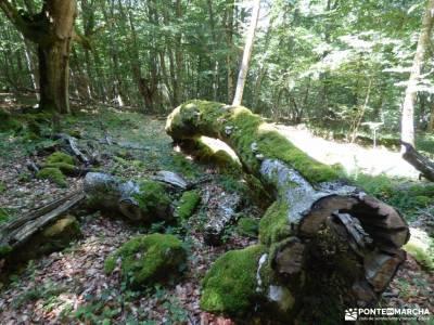 Sedano,Loras-Cañones Ebro,Rudrón;el pardo rutas camorritos cercedilla nacimiento rio cuervo cuenca